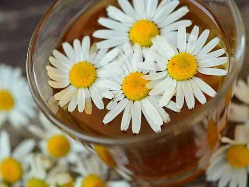 chamomile tea with daisies