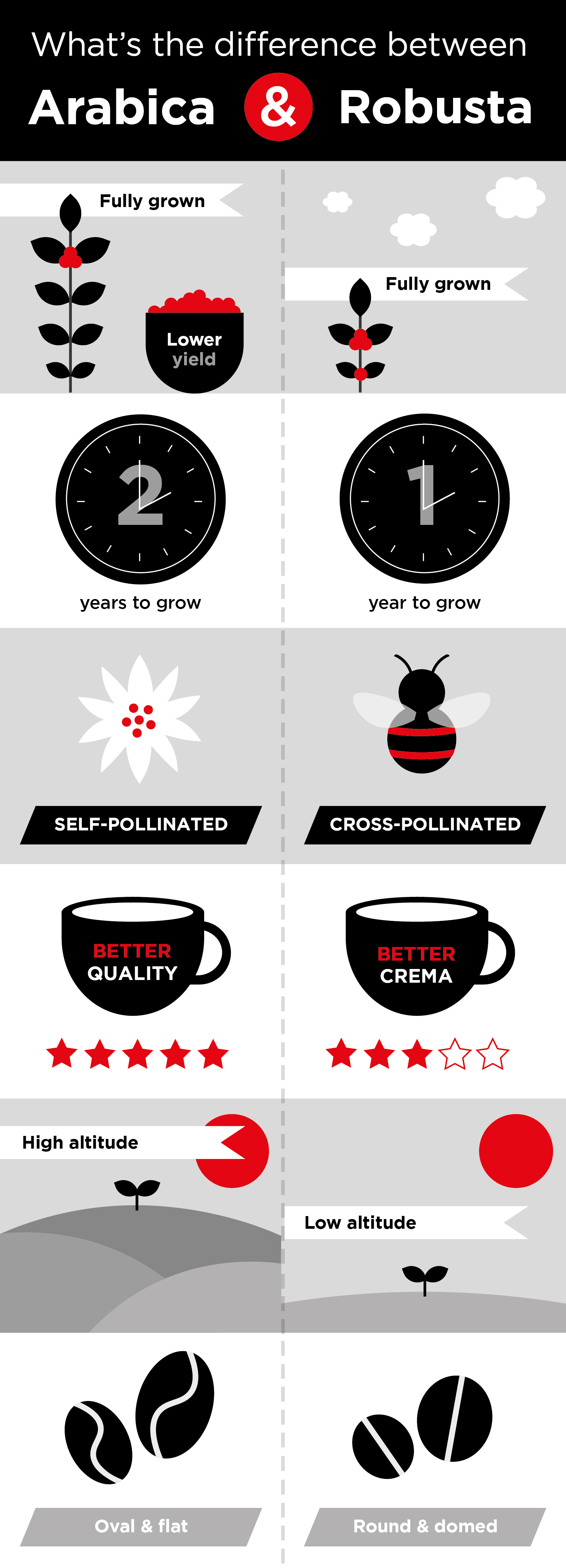 arabica and robusta coffee differences