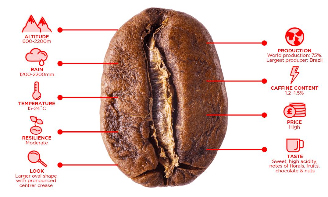 Arabica coffee blend traits