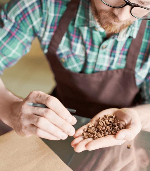 Barista examines coffee beans